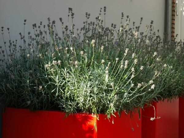 Rode plantenbakken