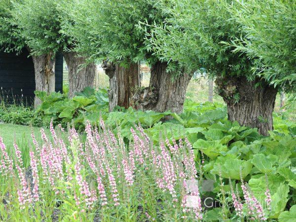 Natuurlijke tuin in soest tuinontwerpburo groenendijk for Tuinontwerp natuurlijke tuin